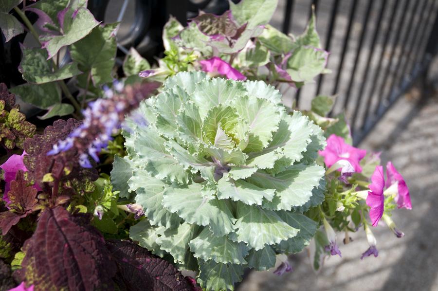 River Market Flowers