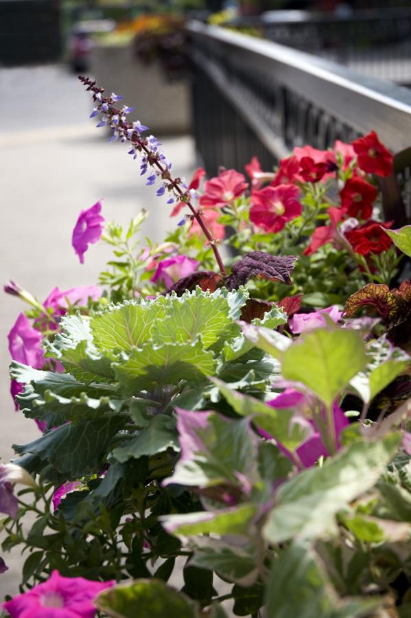 KC Rivermarket Flowers