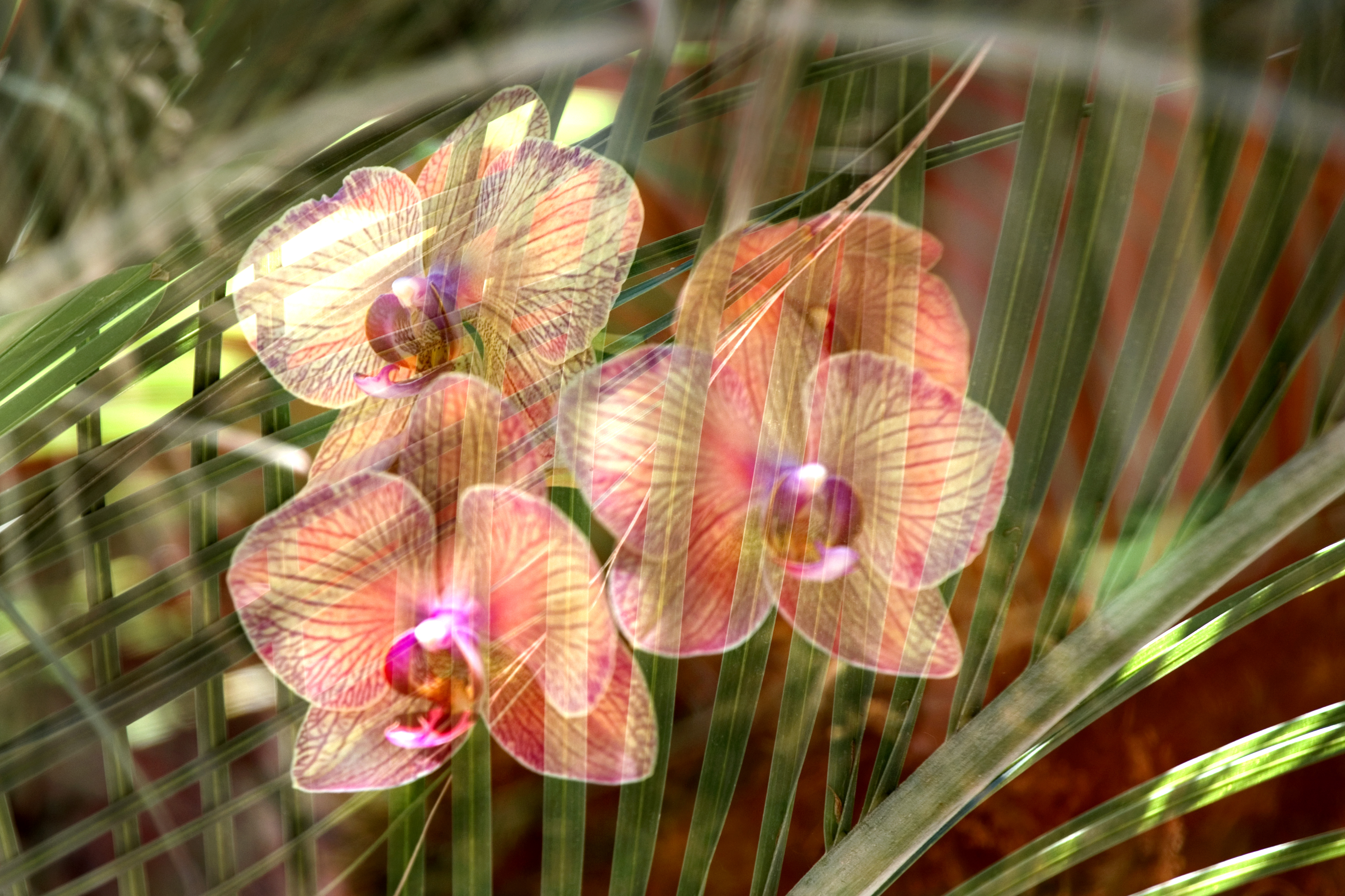 Orchids & Leaves
