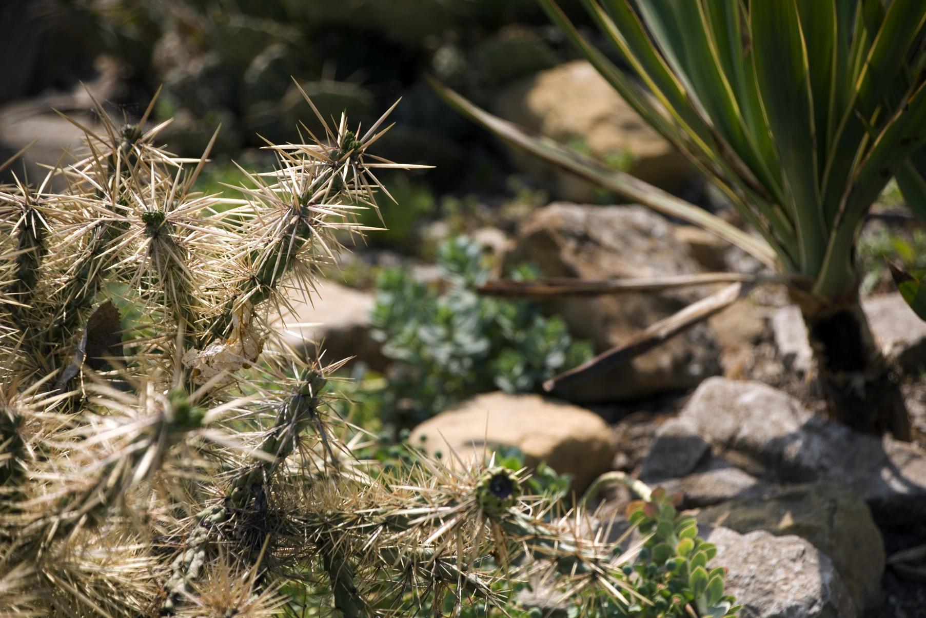Cactus & Rock Garden