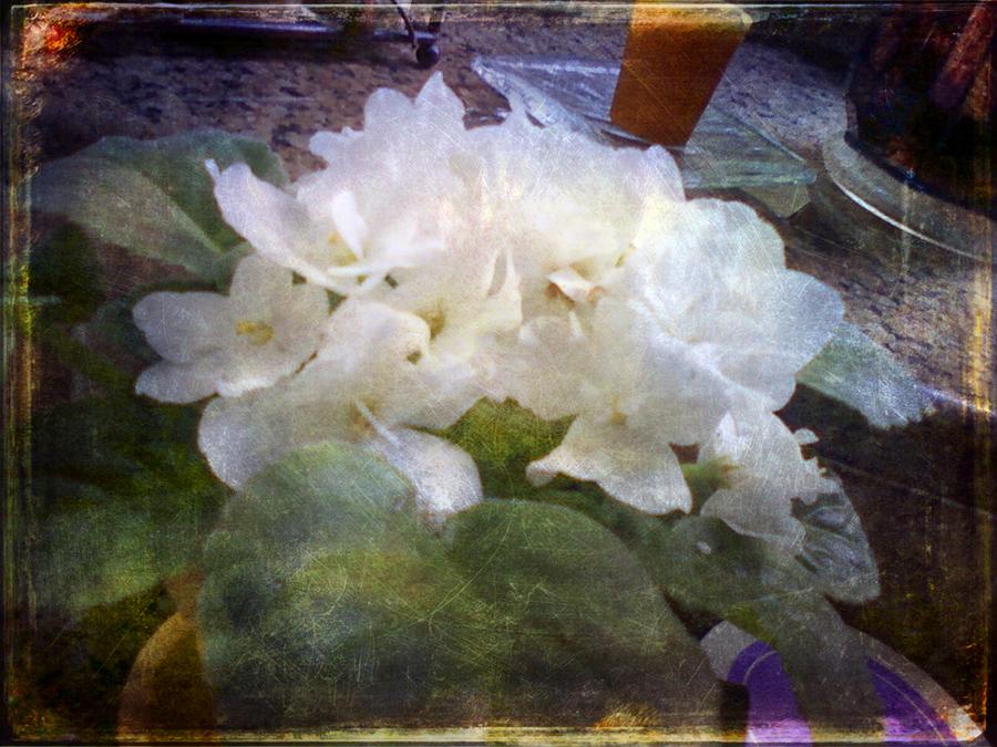 05.20.11 - Kitchen Flowers