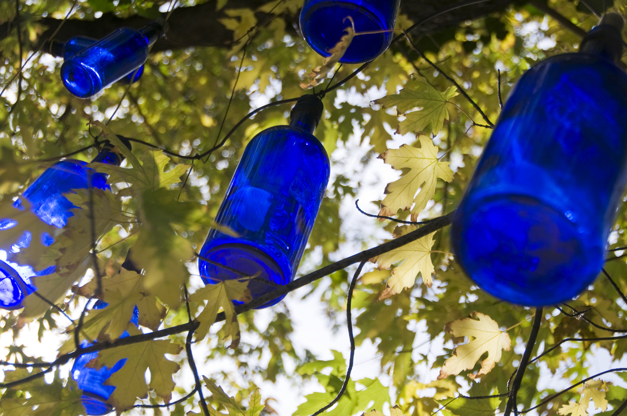 Blue Bottles in a Tree
